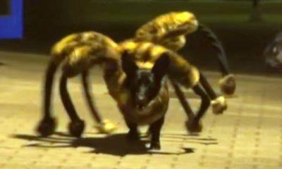 mutant giant spider dog
