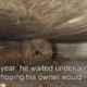 Dog Gets Rescued 1 Year after his Owner Died…Watch Heartwarming Video