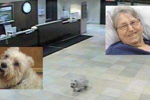 Dog Visits Cancer-Stricken Owner in Hospital after Walking 20 Blocks