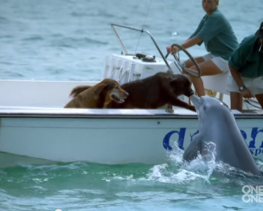 Dolphin Jumps for Joy After Kissing the Dog on a Boat!