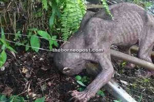 Terrifying Creature Appears in Malaysian Plantation and Attacks Workers