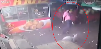 man kicks dog, gets instant karma