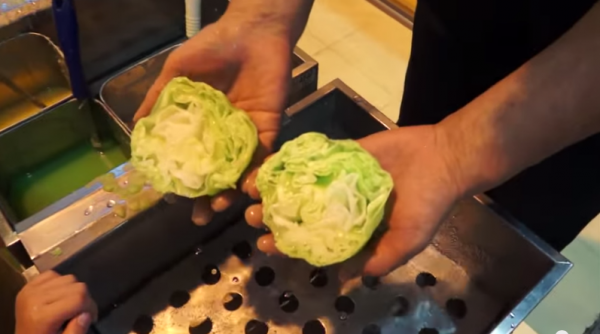 Can you tell whether this is real cabbage or a clone? Photo credit: YouTube