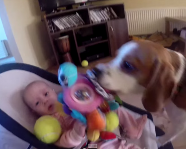This Dog Apologized for Stealing the Baby's Toys…So Cute