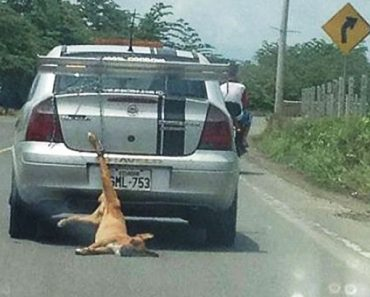 Heartbreaking Photo Shows Dog Being Dragged by Cruel Owner's Car