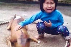 Dog Lover's Nightmare: Girl Discovers Her Missing Dog Cooked and Being Sold