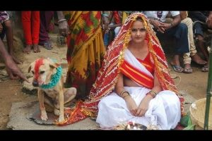 Indian Girl Marries a Dog to Get Rid of Her Evil Curse
