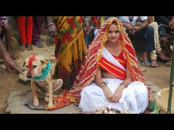 indian marries dog