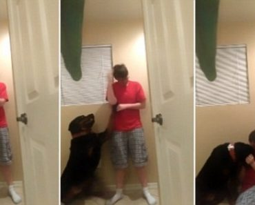 Service Dog Saves Owner with Autism Spectrum Disorder from Self-Harm while Having a 'Meltdown'
