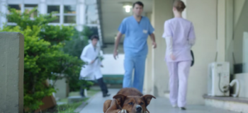 Faithful Dog Detects Owner's Scent in Recipient of Organ Donation…Unbelievable!