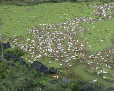 Karma for Yulin Festival? Flash Floods Kill 16,000 Pigs in China