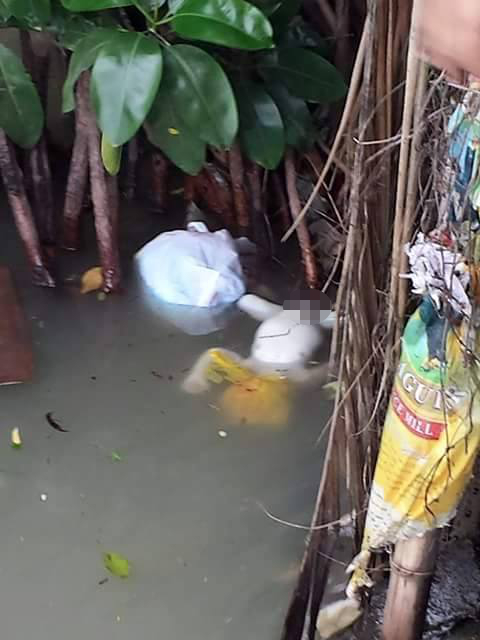 baby thrown in river