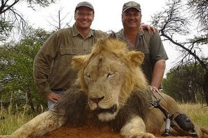 American Dentist Accused of Killing Zimbabwe's Much- Loved Lion