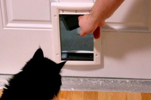 WATCH: Clever Cat Refuses to Enter Cat Door. Instead, It Unlocks Front Door of Owner's House