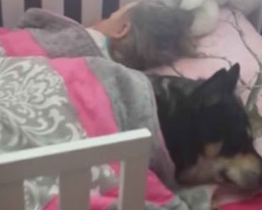 Mom Checks on Baby Daughter and Finds Their Pet Dog Sleeping Soundly With Her