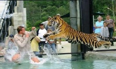animal attacks
