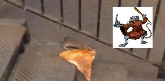 master splinter rat