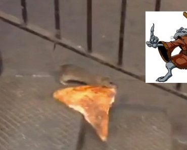 """Video of the """"Pizza Rat"""" Struggling Down the Subway Stairs Goes Viral"""