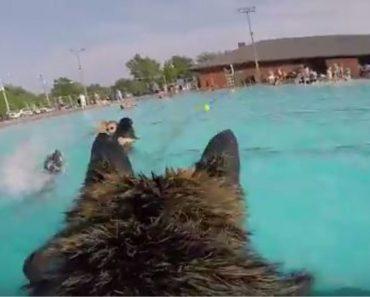 GoPro Video Shows German Shepherd's View of Pool Party