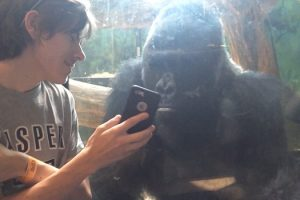 WATCH: Gorilla Motions to See a New Photo on iPhone