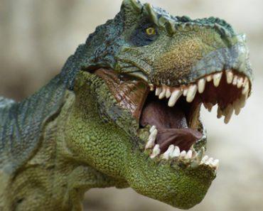 Scientists Discover New Species of Dinosaur In Alaska
