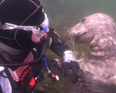 Seal Asks Thrill-Seeking Diver for a Belly Rub