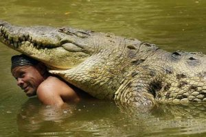This Guy Swims Daily with a 5-Meter Crocodile! Unbelievable!