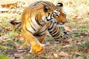 These Asian Animals Can Kill You in Seconds…Avoid at All Costs!