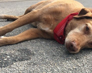 Dog Found Mourning at The Place Where Its Owner Was Killed