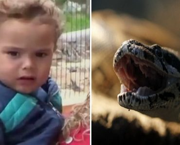 17-Month-Old Boy Kills Venomous Snake with One Bite