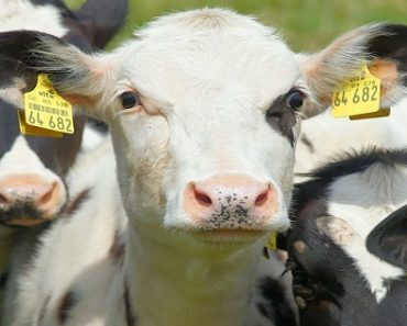 World's Largest Animal Cloning Factory to Open in China