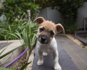 Experts Reveal Why Dogs Tilt Their Heads When You Speak to Them