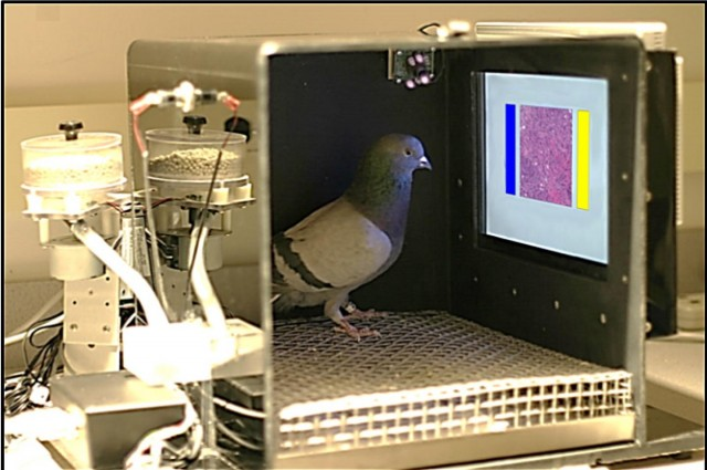 PHOTO CREDIT:  Univ. Iowa/Wassermann Lab via IFL Science