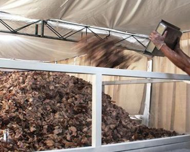 Philippines Sets New World Record For Biggest Serving of Lechon