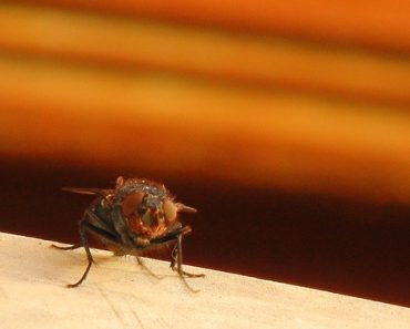 If a Fly Has Landed on Your Food, Should You Throw It Away?