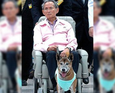 Thai Could Face up to 37 years in Prison for Insulting King's Dog
