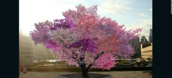 LOOK: Magical Tree Grows 40 Different Types of Fruits