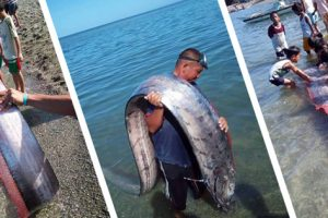 Rare Giant Oarfish Found On Albay Beach In The Philippines