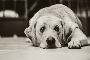 How to Spot if Your Pet is Suffering from Depression