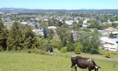Tokoroa_From_Scenic_Lookout