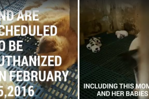 Baguio City Dogs Set to Be Euthanized Find Hope in Kindhearted Netizens