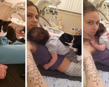 Cat Cuddles Woman's Pregnant Belly… And Her Baby After She Gives Birth