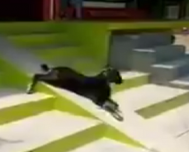 VIDEO: This Adorable Baby Goat Loves to Slide!