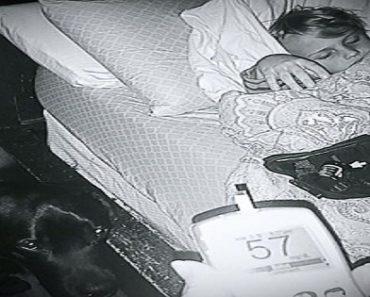 Glucose-Sniffing Dog Saves Sleeping Diabetic Boy