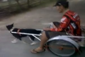Video of Man Riding a Dog-Pulled Cart Goes Viral, Sparks Debate