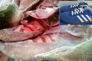 1,500-Year-Old Mummy Wearing Adidas Trainers, Proof that Time Travel Exists?