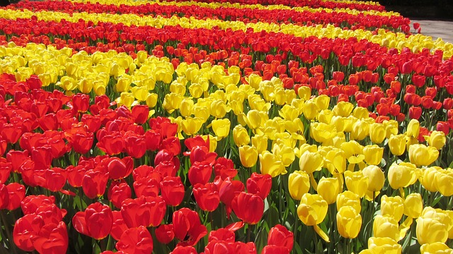Keukenhof in The Netherlands