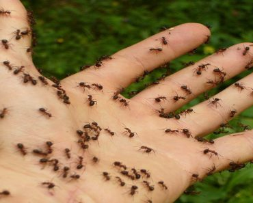Easy Ways to Get Rids of Ants in Your Home… For Good!