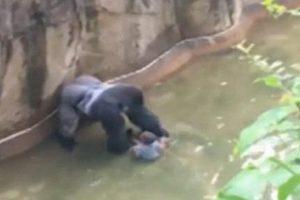 Zoo Kills Endangered Gorilla after Child Falls into Enclosure