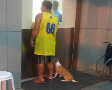 Loyal Dog Rushes to ER with Dying Owner